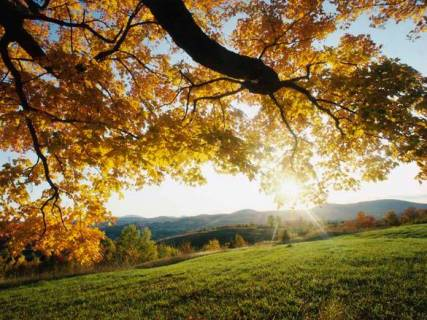 sunny-autumn-day